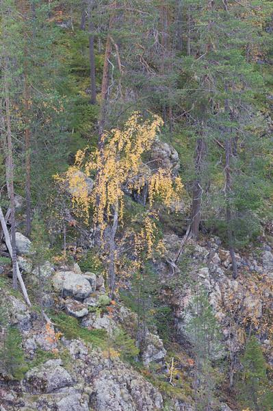 Autumn at Hossa, Finland