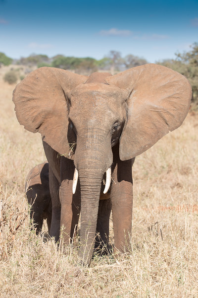 Africa - 102016 - 7596.jpg