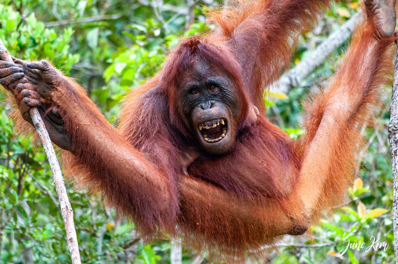 2012.10.07_Borneo_DSC_7124-Juno Kim.jpg