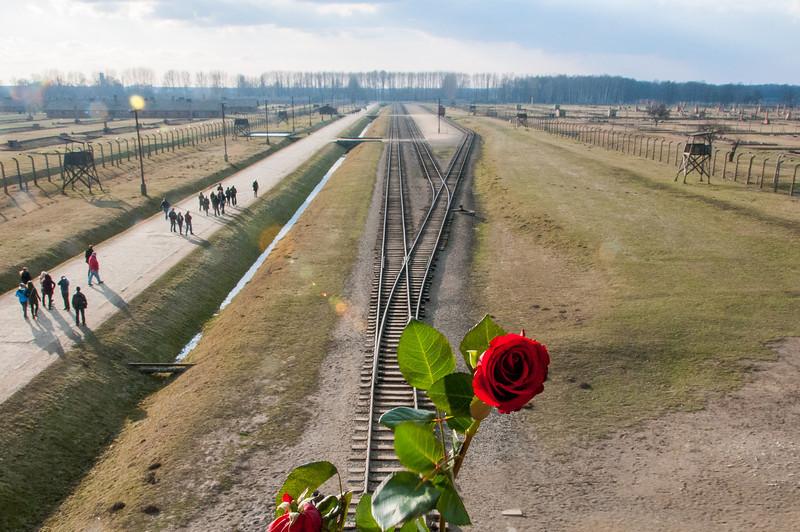 Rose for memorial at the Auschwitz Birkenau in Krakow, Poland