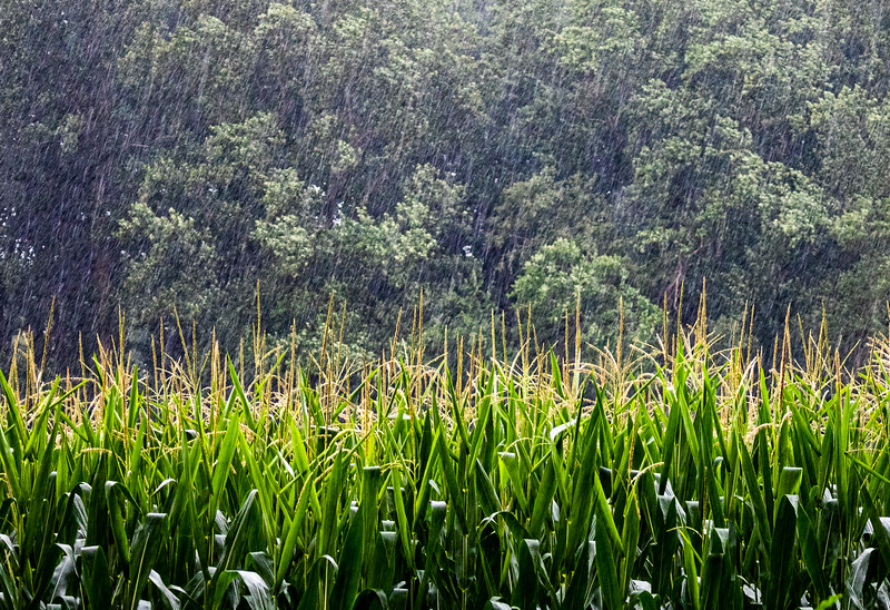2020-Week 33 - Summer Rain over the Corn.jpg