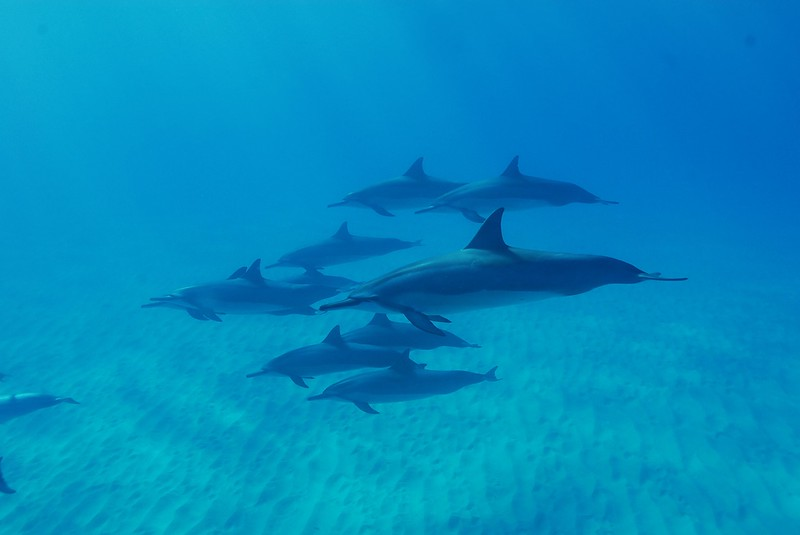 things to do in Maui - Dolphins