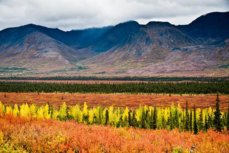 Brilliant fall color.