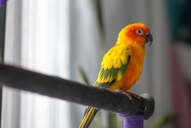 untitledbirds easterApr.jpg