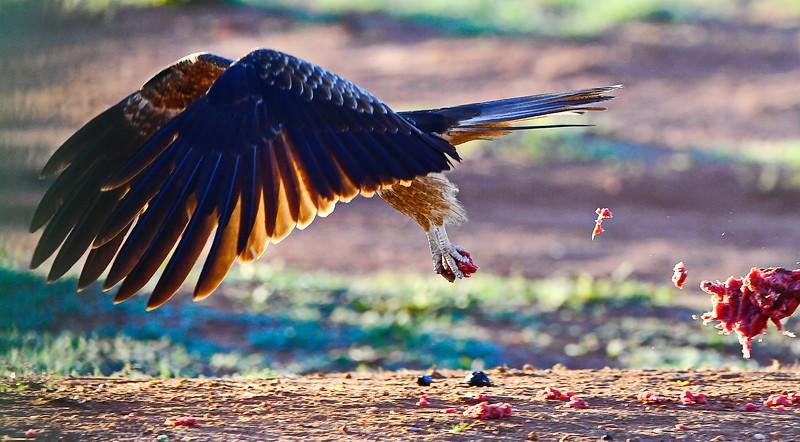 Hawks again