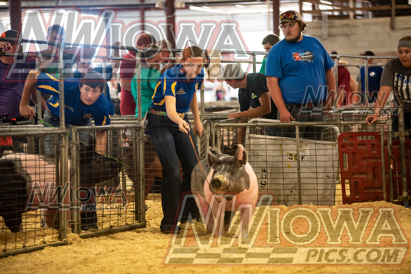 Friday  Swine show