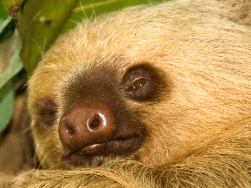 Costa Rica_Sloth-2.jpg