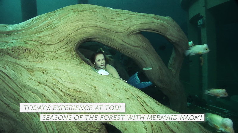 TODAY AT TODI: Seasons of the Forest with Mermaid Naomi Preview Short - Dutch Version