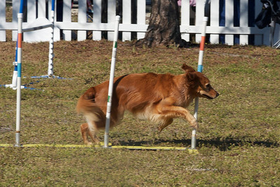 Sheriff's Run for the animals