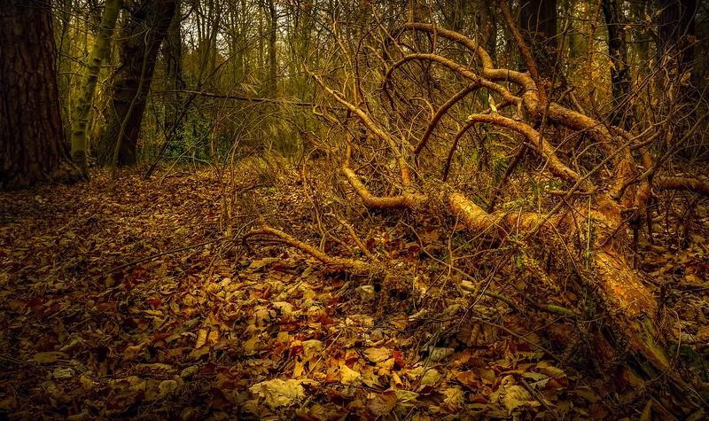Forest Shadows-125.jpg
