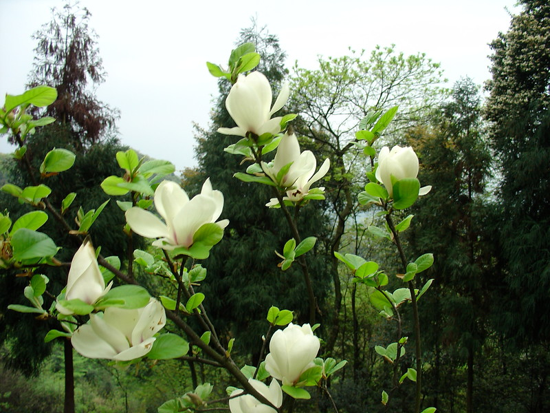 Китай 2005 255.jpg