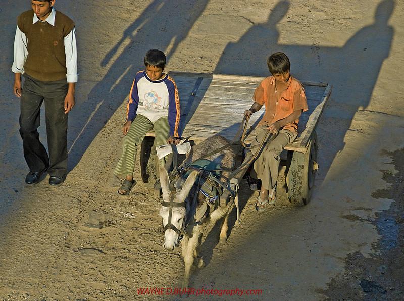 India2010-0204A-451.jpg