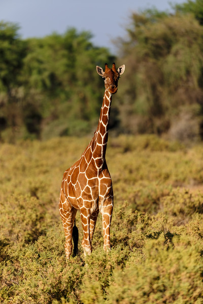 Kenya 2015-02340.jpg