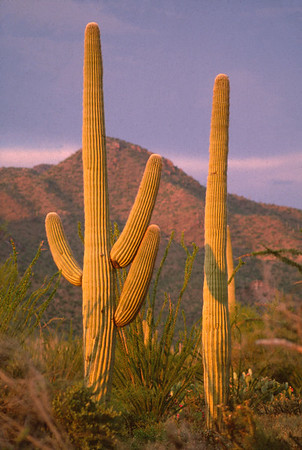 Arizona Scenic & Nature Images
