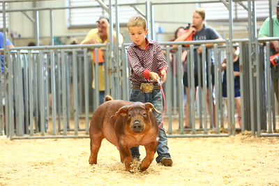 2018 TAMU Saddle & Sirloin Futurity Show