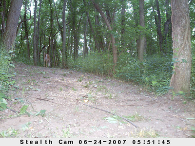 Stealth I450 Trail Camera-Just the good ones!