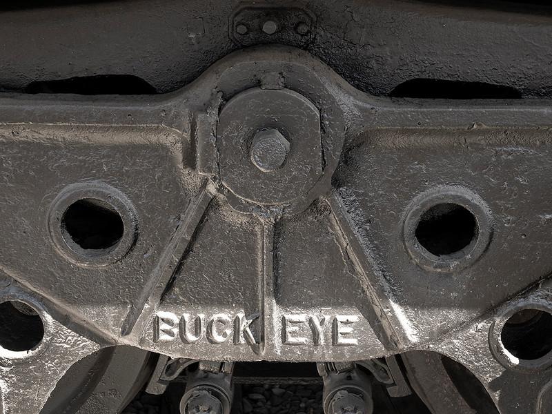 buck eye.jpg