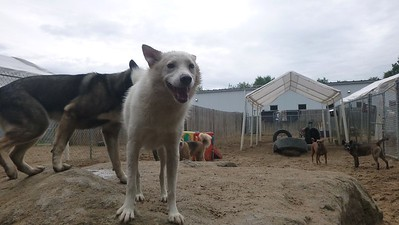 All Dogs Gym 6-26-2015