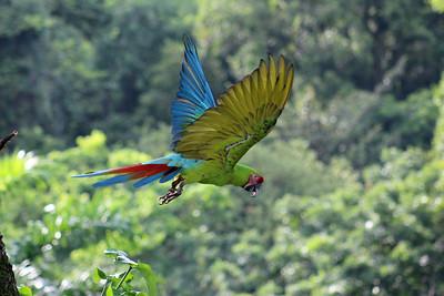 BIRDS  --  15 species