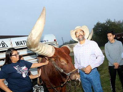 Vincent Browning brings an African Watusi Steer  to show the REL FFA