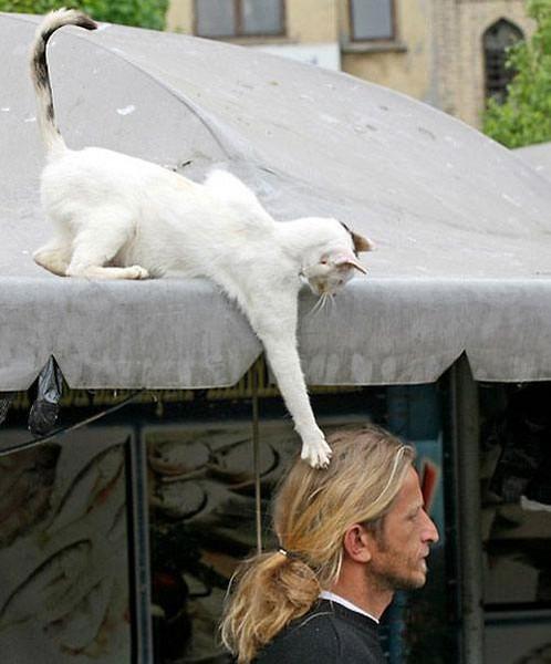 cat hair.jpg