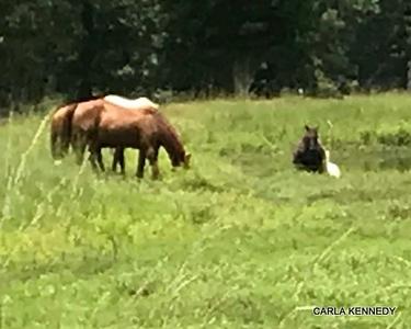 2018 07-21 Horses near Mom