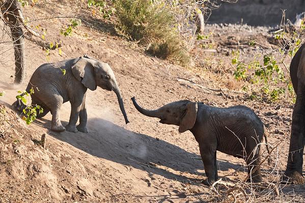 Elephant Greetings Mashatu Botswana 2019