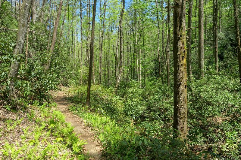Laurel Creek Trail -- 2,600'