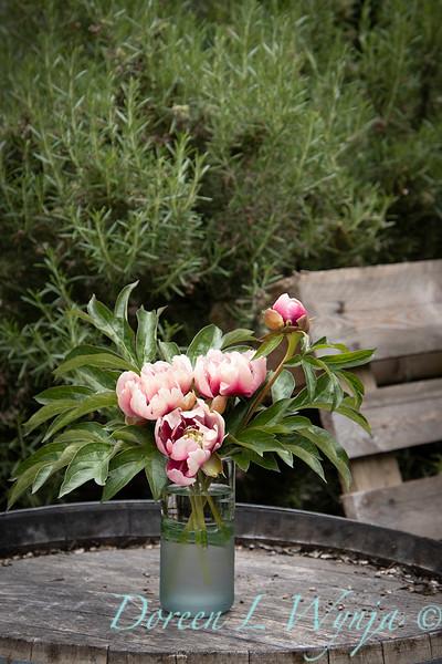 Paeonia x 'RTPIV791-38' Caroline Constabel - Peony cut flowers_1218.jpg