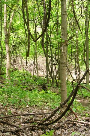 Boyce Park 20090516