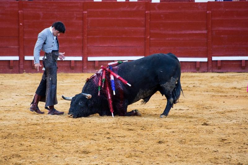 Bullfighting H25.jpg