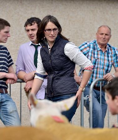 Danske Bank Northern Ireland Premier Show & Sale of Texel Sheep 2014
