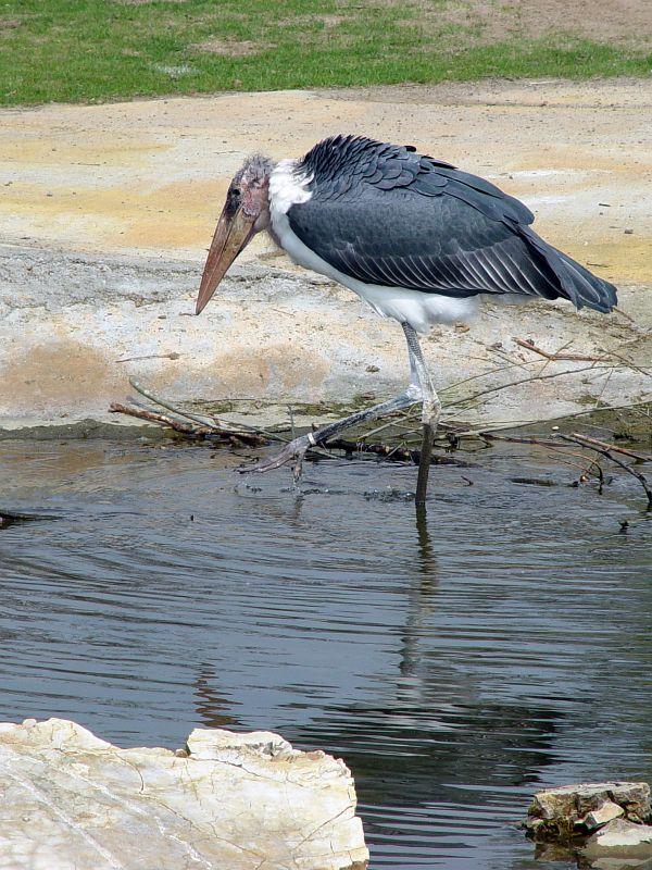 2005-04-18_04644 großer Vogel