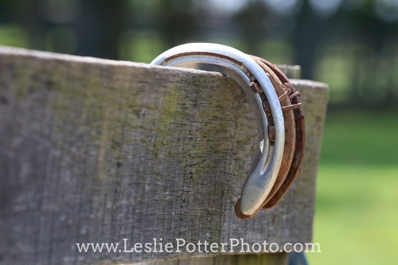 Lost Horse Shoes