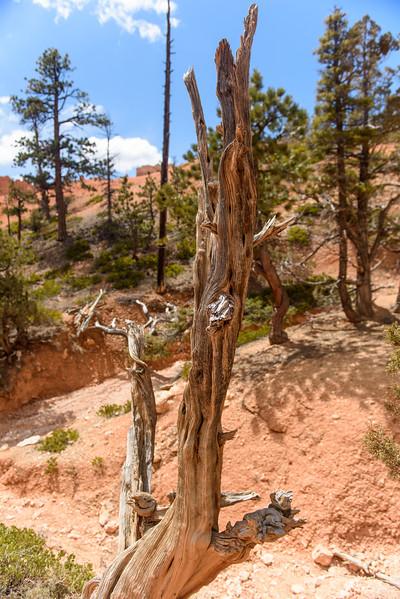 20160326 Bryce Canyon 170.jpg