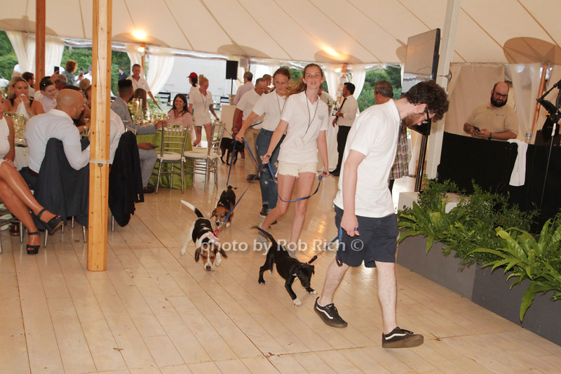 Unconditional Love 2019- SH Animal Shelter