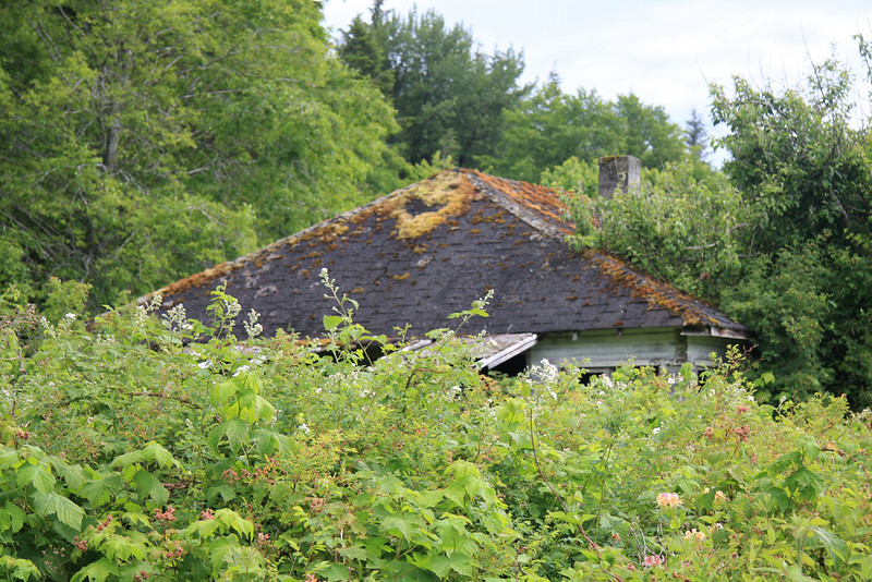 Nature reclaims a house on the abandoned native village of Mamalilaculla.