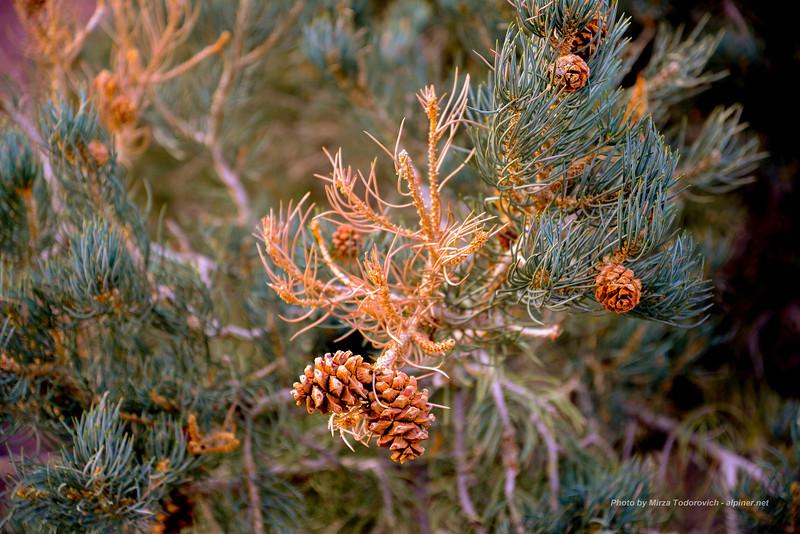 lone_pine_2-14__005.jpg