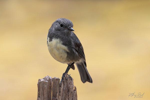 Video's  - Birds
