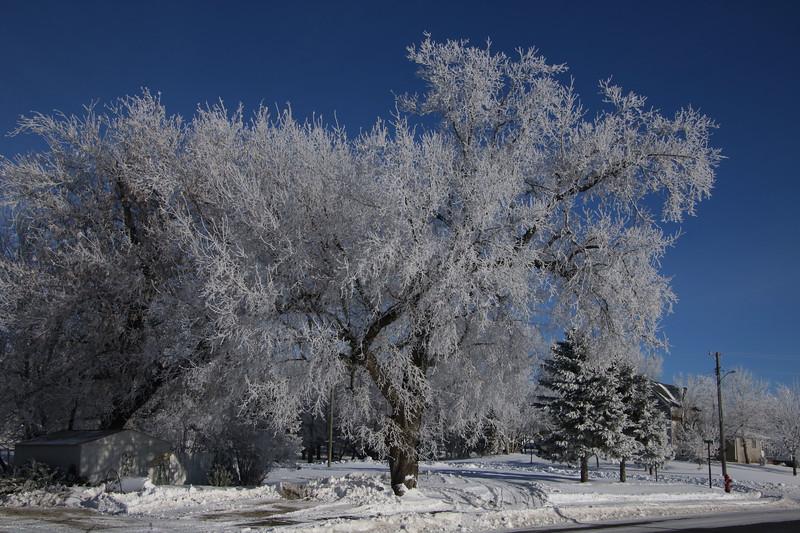 Winter Wonders 04.jpg