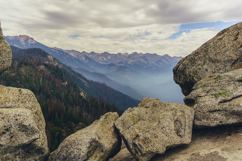 Rui in Sequoia-07082.jpg
