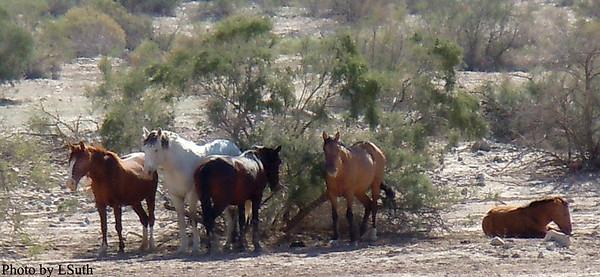 2010 Arizona Visit November