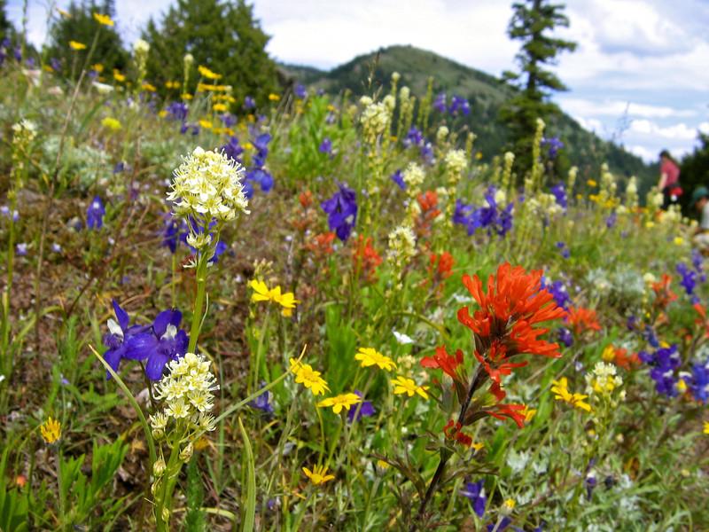 wflowers1.jpg