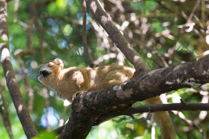 Madagascar_2013_FH0T2444.jpg