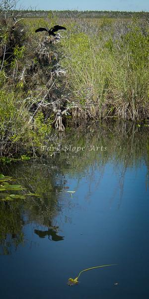 Birds-01404.jpg
