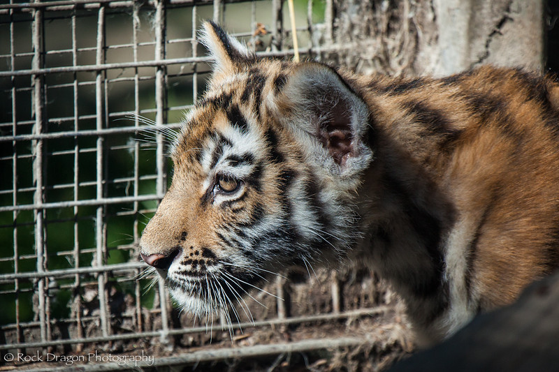 zoo_july_2012-12.jpg