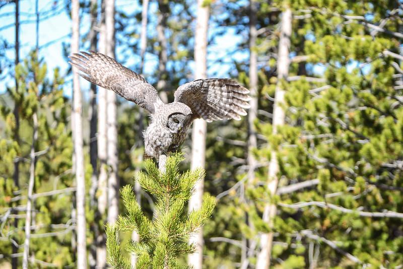 Fall Trip Wyoming & Montana 2016 (110 of 193).jpg