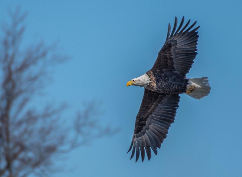 smug eagle 2.jpg