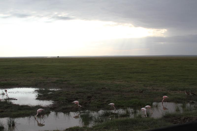 Kenya 2019 #2 1987.JPG