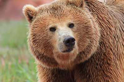 Tammy's bears